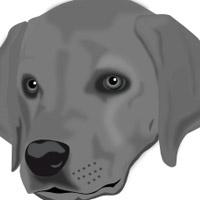 real-dog-eye