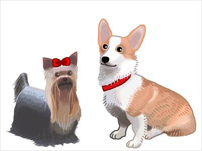 犬のリアルイラスト03