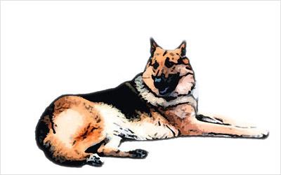 犬のリアルイラスト04
