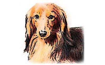 犬のリアルイラスト05