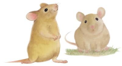 リアル系ネズミの無料イラスト