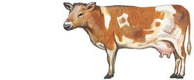リアル系牛の無料イラスト